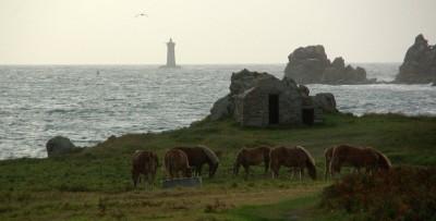 Leuchtturm Le Four mit grasenden Pferden